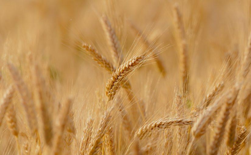https://sklep.arkop.pl/rolnictwo/zboza-ozime.html